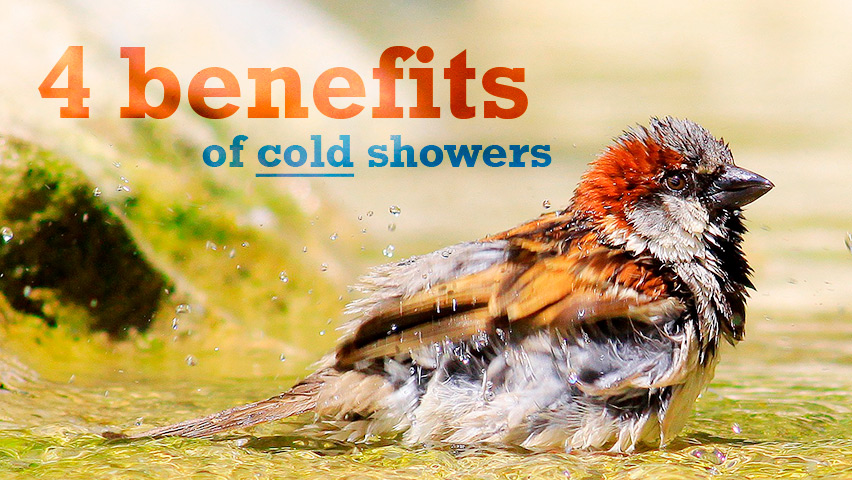 Four benefits of taking cold showers.